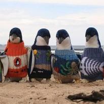 Cel mai batran om din Australia tricotează puloverase pentru pinguini