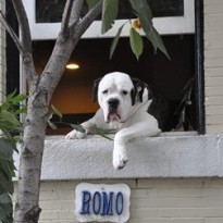 Romo, cainele superstar din Washington, se mută